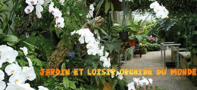 loisir et jardin et orchid es du monde la culture des tomates sous serre froide. Black Bedroom Furniture Sets. Home Design Ideas